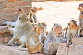 Monkeys are curious — Stockfoto