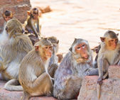 Monkeys are curious — Stock Photo