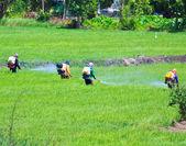Farmer spray insecticide — Stock Photo