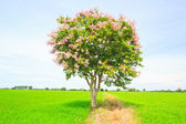 Green tree — Stock fotografie