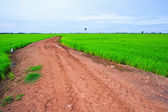Country road on rice field — Stock Photo