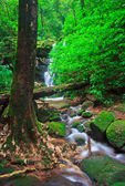 Belle cascade — Photo