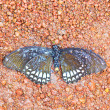 Dead butterfly in national park — Stock Photo #37651269