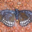 Dead butterfly in national park — Stock Photo #37651301