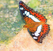 Butterfly in pang sida national park — Stock Photo