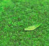 Zelený mech — Stock fotografie