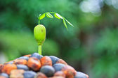 Seed sprout tree — Stock Photo