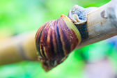Snail on the branch — Stock Photo