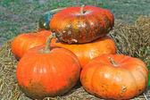 Pumpkin variety — Stock fotografie