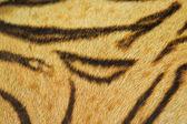Beautiful tiger fur texture — Stok fotoğraf