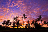 View silhouetted of coconut tree — Stock Photo