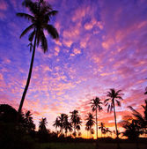 View silhouetted of coconut tree — ストック写真
