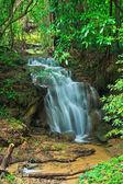 şelale orman — Stok fotoğraf
