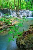 Waterfall in the forest — Foto de Stock