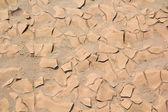 Cracked soil ground — Stock Photo