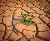 Plant growth between cracked soil — Photo