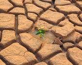 Plant growth between cracked soil — Stock Photo