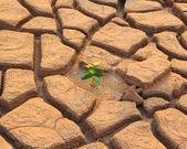 Crescita delle piante tra suolo cracking — Foto Stock
