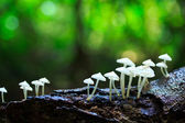 White mushrooms — Stockfoto