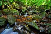 Cascada del bosque — Foto de Stock