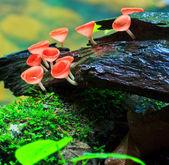 红色蘑菇, — 图库照片