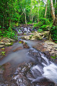 Waterfall in rainforest — Stock Photo