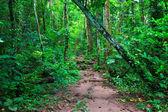 Tropical trail in dense rainforest — Stock Photo