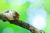 Snail in the rainforest — Stock Photo