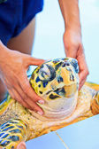 Treatment of sea turtles — Stockfoto