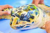 Treatment of sea turtles — Stock Photo