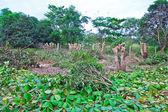 木の切り株 — ストック写真
