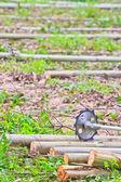 Saw to cut wood Sawing machine — Stock Photo