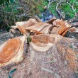 Deforestation — Stock Photo #38020625