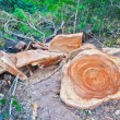 Deforestation — Stock Photo #38020673