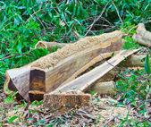 砍伐森林 — 图库照片