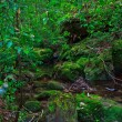 Stock Photo: Tropical Rainforest Landscape