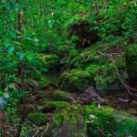 Tropical Rainforest Landscape — Stock Photo