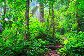 Orman ağacı — Stok fotoğraf