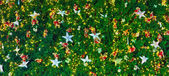 Christmas tree with lights — Stock Photo