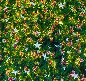 Рождественская елка с огнями — Стоковое фото