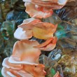 Stock Photo: Pink oyster mushrooms