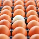 Eggs background — Stock Photo #38177691
