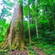 Big tree in the forest — Stock Photo #38178873