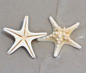 Sea star and shell — Stock Photo