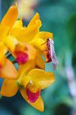 Beautiful yellow orchid — Stock Photo
