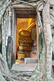 Igreja budista cercada por raízes de árvore — Fotografia Stock