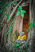 Buddhist church surrounded by tree roots — Stock Photo