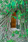 Buddhist church surrounded by tree roots — Stockfoto