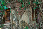 Buddhist church surrounded by tree roots — Foto Stock