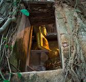 Boeddhistische kerk omringd door boomwortels — Stockfoto